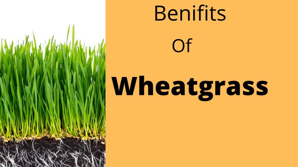 Benefits of wheat grass