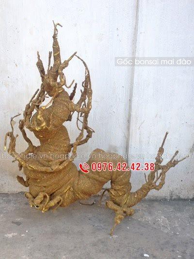 Goc bon sai tai Hang Dao