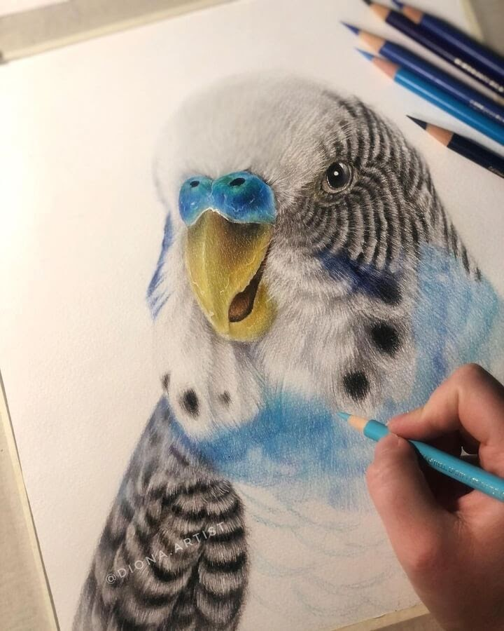 04-Budgerigar-or-budgie-Diona-Ant-www-designstack-co