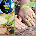 5 जून : पेड़ लगायें तो सेवा- सम्मान भी करें - ब्लॉगर आकांक्षा सक्सेना
