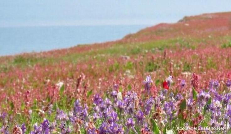 Flores en la rivera del Mar Muerto en Israel