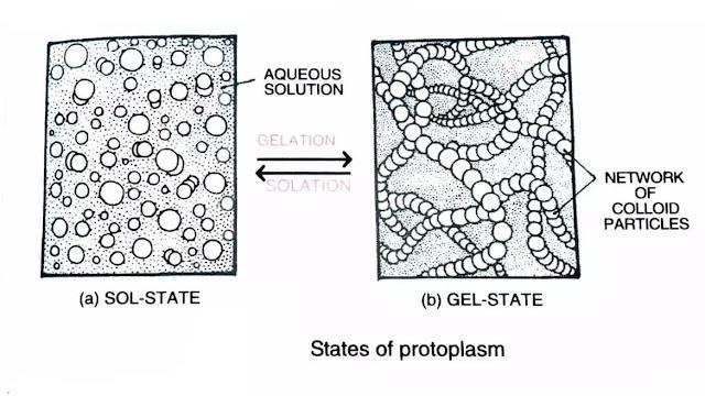 what is protoplasm doctrine