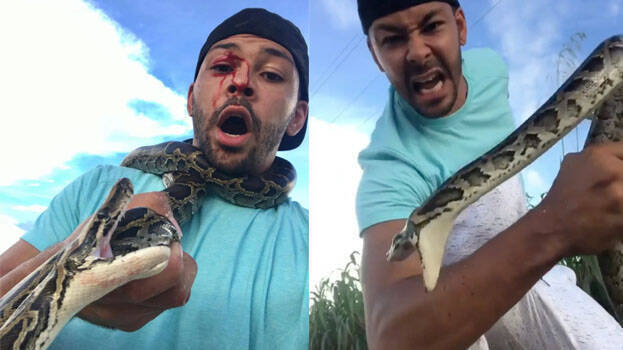 Python bit the face of a reptile lover and ended up on video