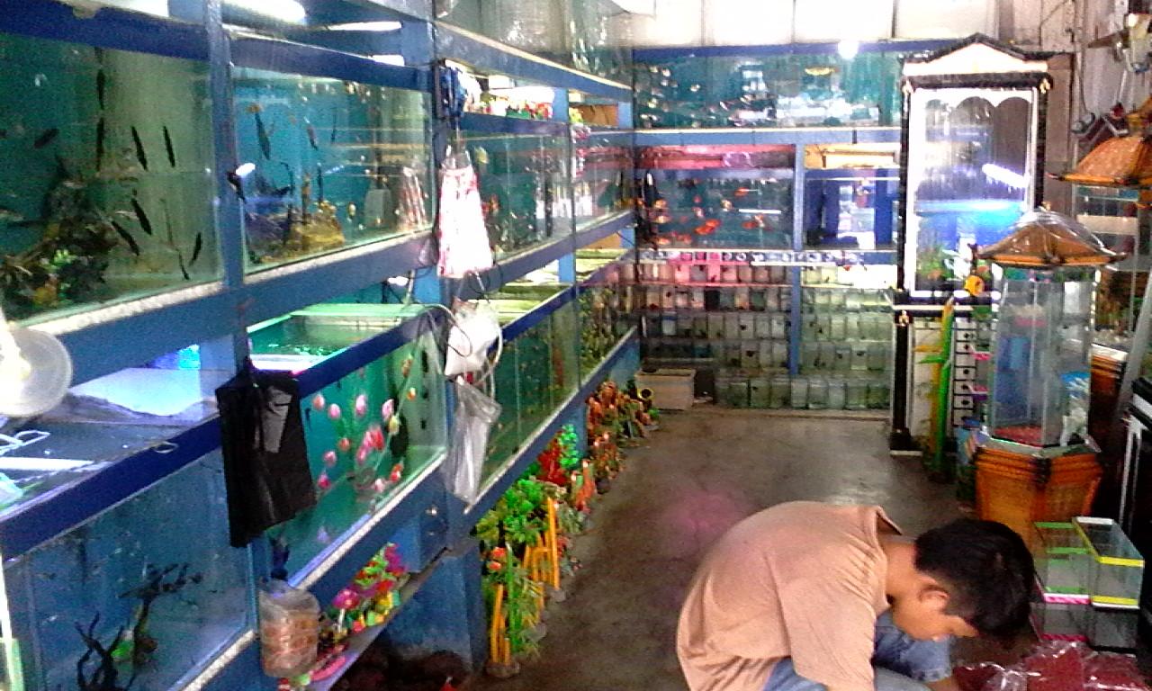 Modal Awal Usaha Ikan Hias - BisikanBisnis