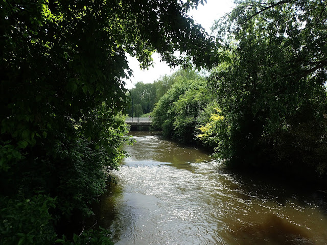Holenderska rzeka Dommel