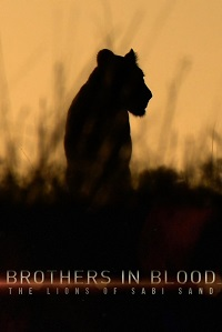 Watch Brothers in Blood: The Lions of Sabi Sand Online Free in HD