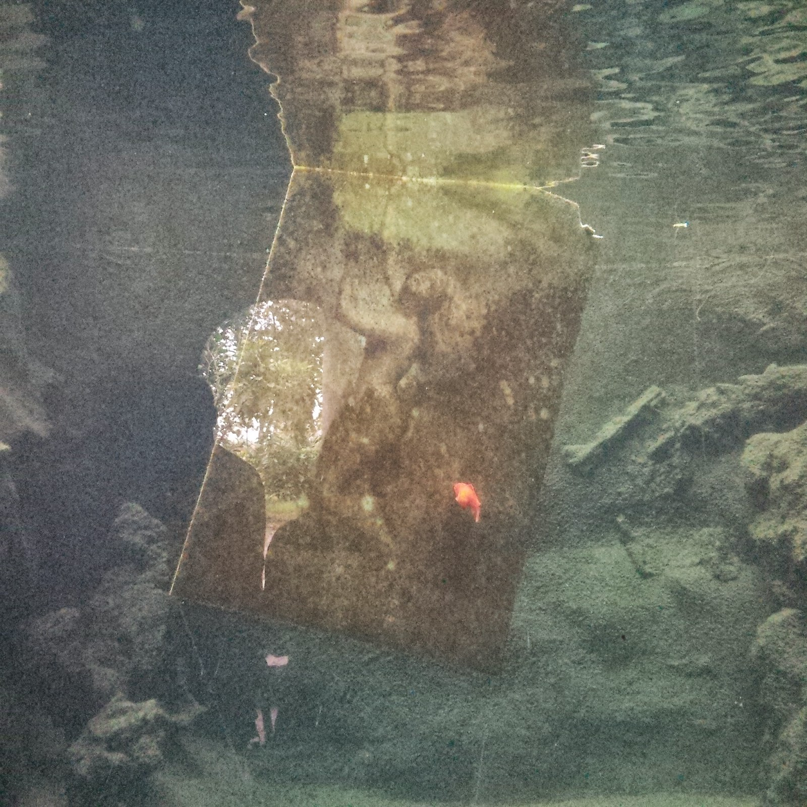 A close up of a painting suspended in the water tanks in the aquarium in the park of Villa Rossi in Santorso