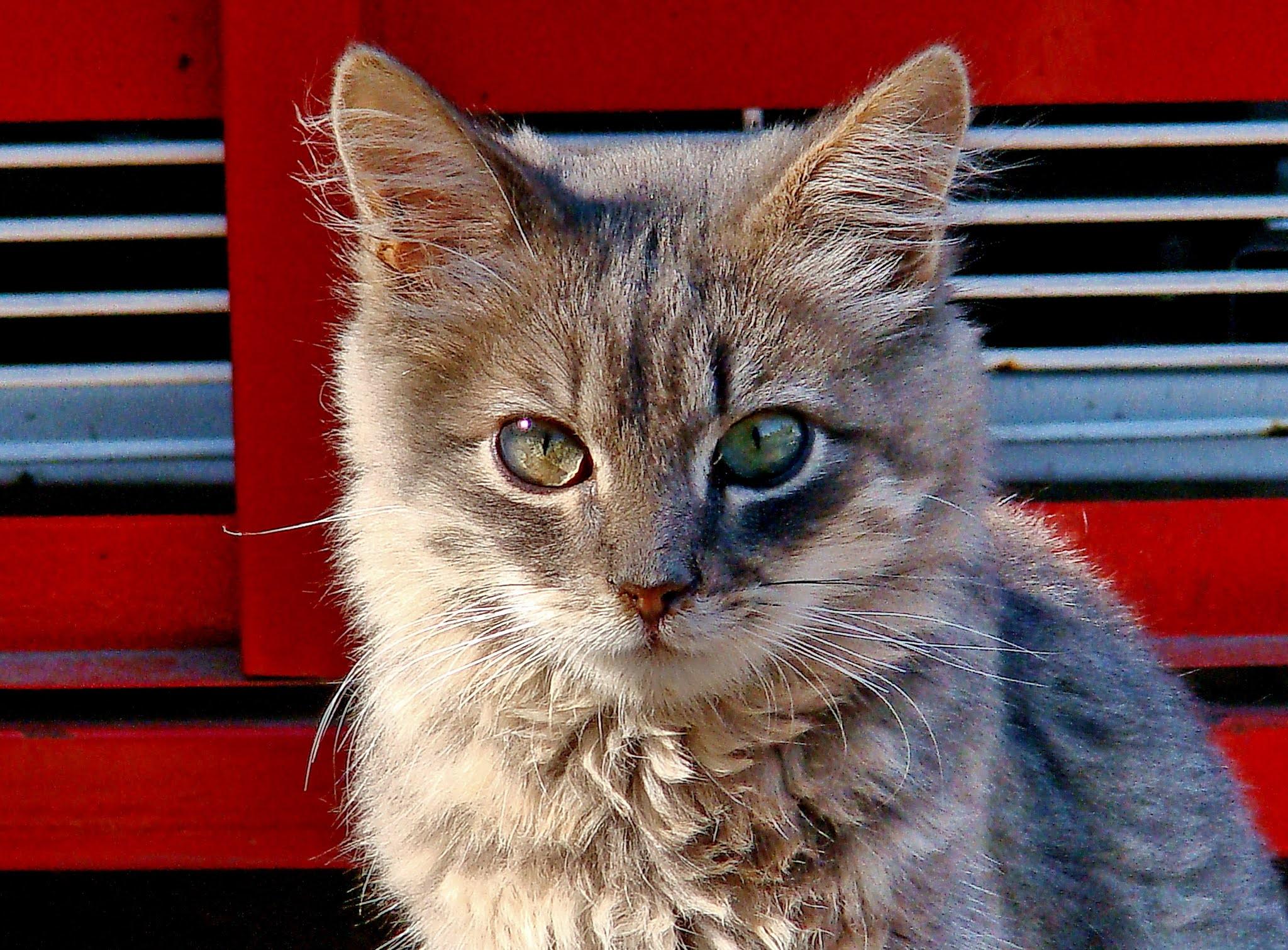 Good Cat or Bad Cat?