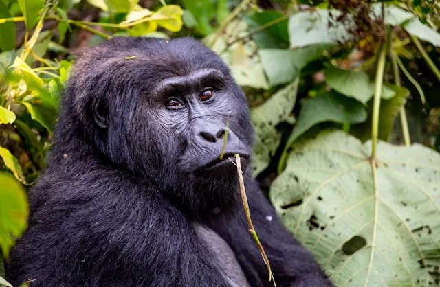 Uganda Travel Guide: Essential Facts and Information