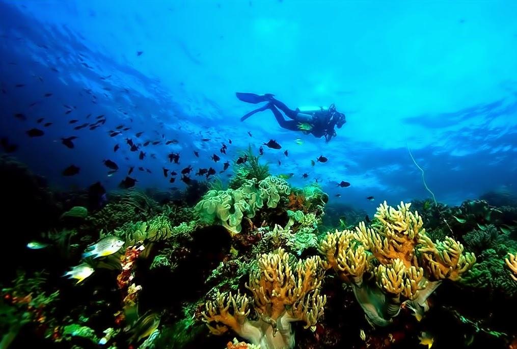 Wisata Bahari Taman Laut Nasional Wakatobi