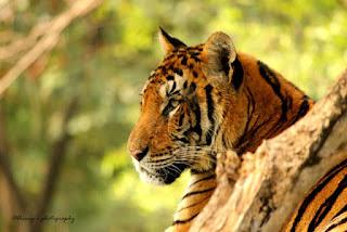 कान्हा किसली राष्ट्रीय उद्यान