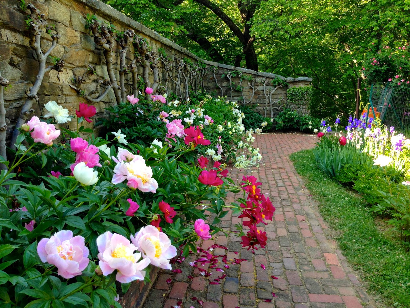 In And Out Of My Garden: Dumbarton Oaks Gardens