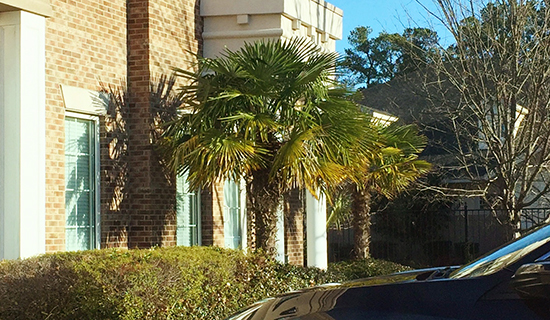 Palm Trees Outside a Building in Our New Home Town