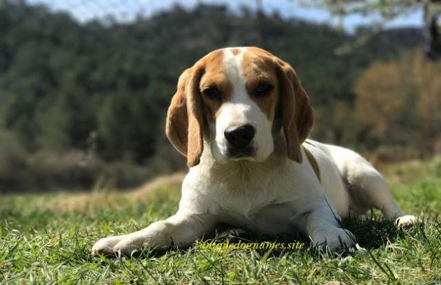 Unique male dog names,Unique Dog Names