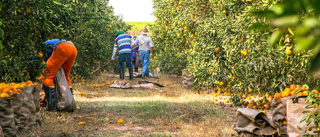 Homem mata outro a facadas durante colheita de laranja em Urupês