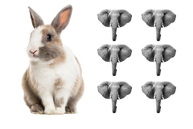 1 rabbit saw 6 elephants while going to the river answer