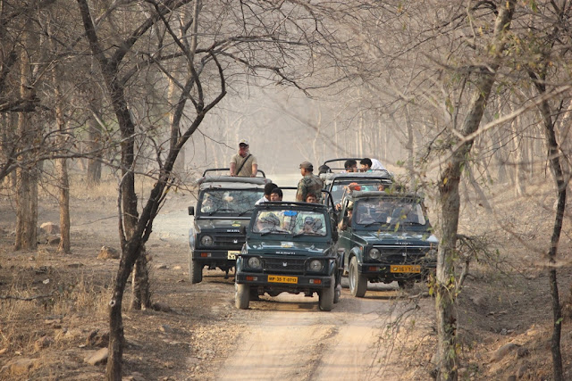 Panna Tiger Reserve- Spine Tourer