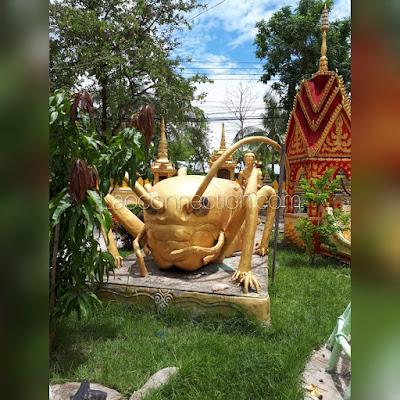 Temple grasshopper