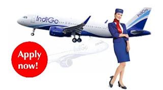 IndiGo recruitment apply for the latest job at indigo,in