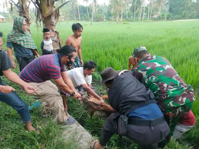Polisi di Lombok Tengah Temukan Sapi Ucul
