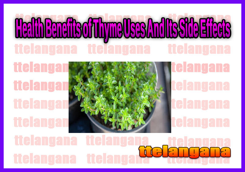 Health Benefits of Thyme Uses And Its Side Effects