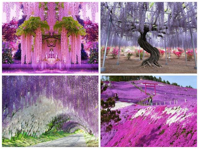 Beautiful Gardens in World