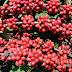 Incaper tem planejamento de ações para incentivar aumento na qualidade do café