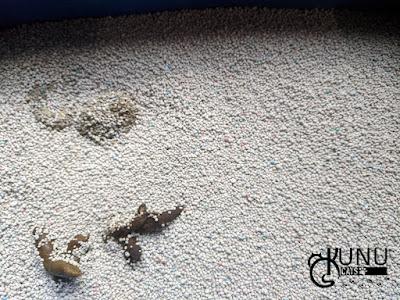 Penggunaan Pasir Gumpal Papin Hari Pertama