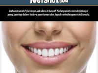 Ketahui Fakta Unik di Balik Filtrum atau Celah Lebar di Bawah Hidung