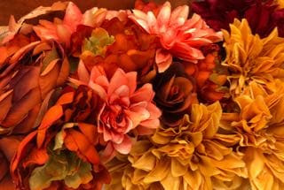 Colorful fall flower collection.
