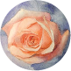 How to paint this rose in watercolor.