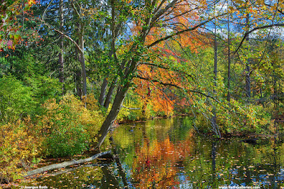 Massachusetts fall foliage photo images