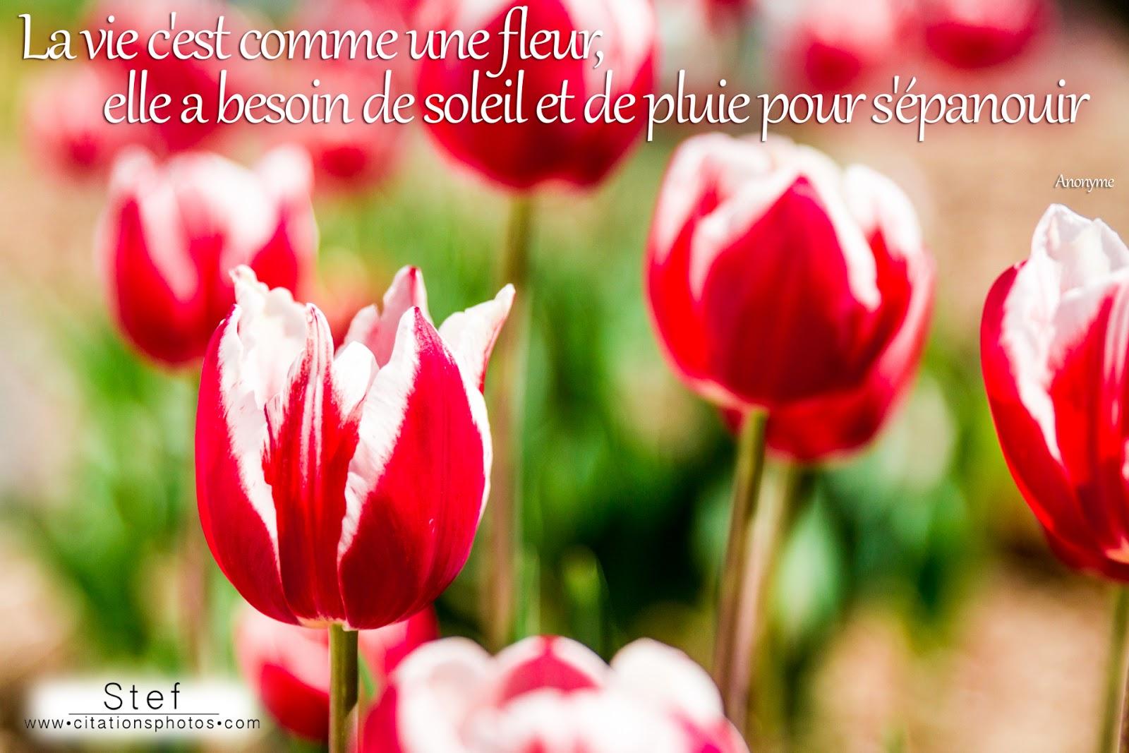 09/03/14 : Proverbes&Citations sur la Vie