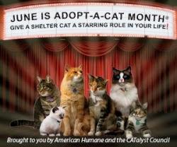 http://catnipoflife.wordpress.com/2014/06/01/adopt-a-cat-month/