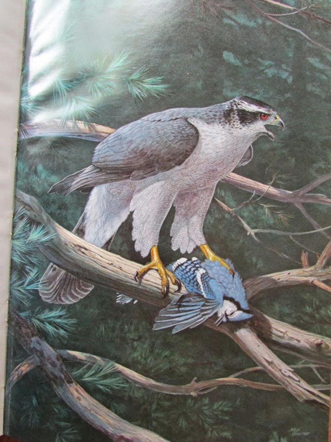 Bird Blog Birds Of Pennsylvania Natural History And Conservation