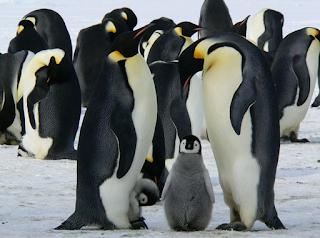 Hewan Pinguin, Burung yang tidak bisa terbang tapi ahli renang