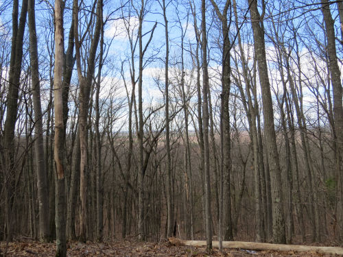 hills in Manistee National Forest