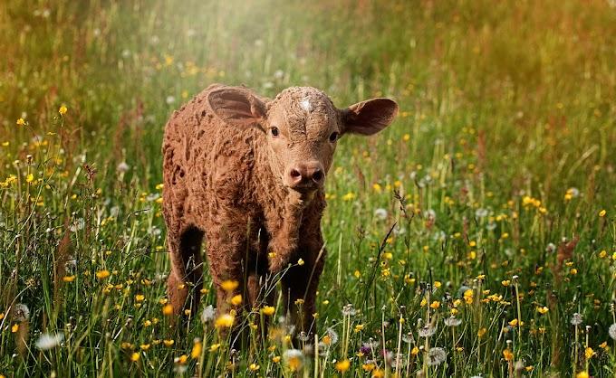 Cursos de ganadería regenerativa
