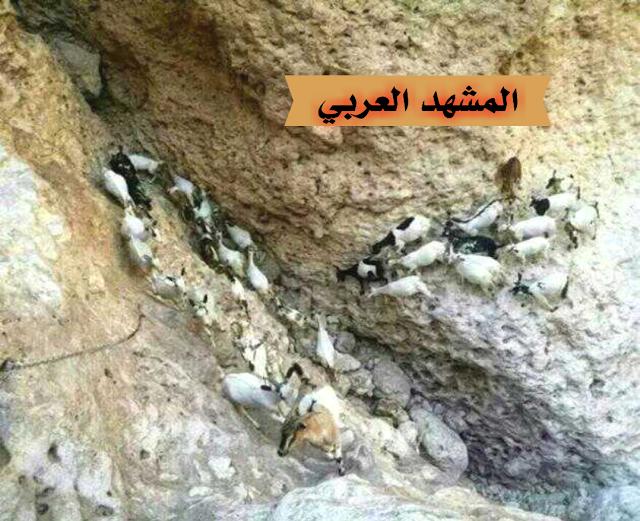 شبوة: راعي أغنام دخل يستظل في كهف فعثر على كنز ثمين وغير متوقع.. صور