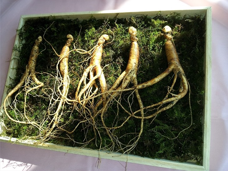 10 health benefits of ginseng