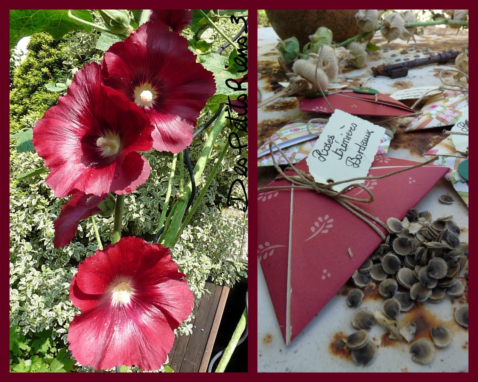 Despetitsriens3 partager les graines - Semer roses tremieres septembre ...