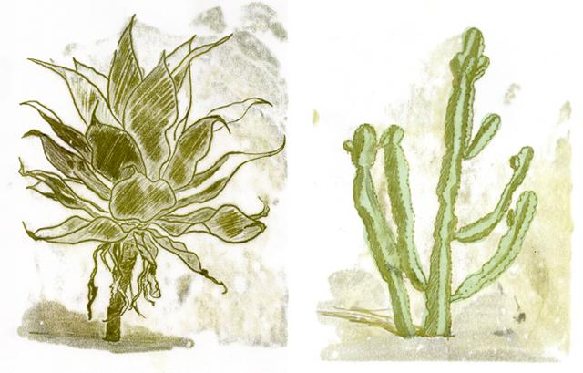 monotype monotipia cactus kaktus sketch Skizze
