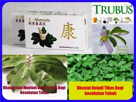 K-Muricata Teh Herbal Kesehatan Tubuh