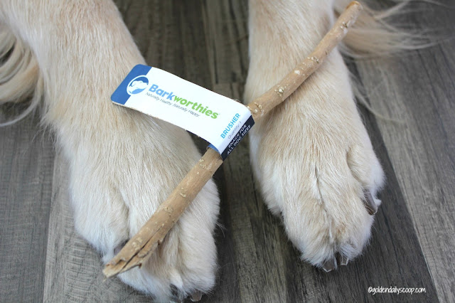 barkworthies brusher review for pet dental health month