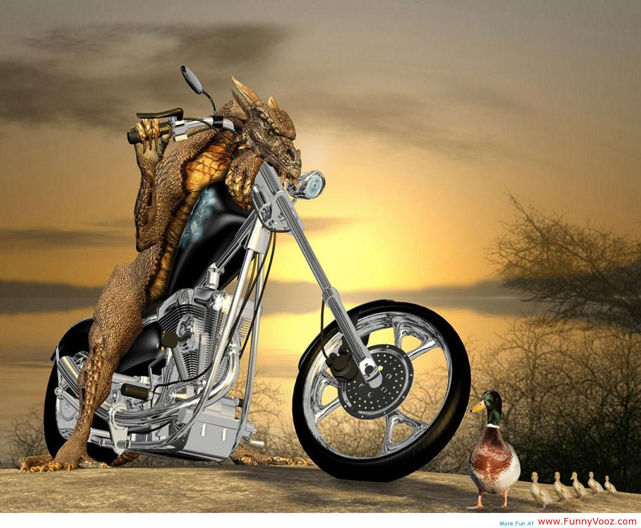 Funny bike accident image, sports bike crash picture, bike ...