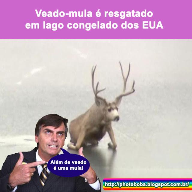 Imagens zuando bolsonaro