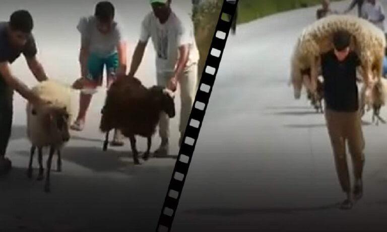 Λέσβος: Κλοπές και σφαγές ζώων από αλλοδαπούς – Σε απόγνωση οι κτηνοτρόφοι (vid) | istioforos news