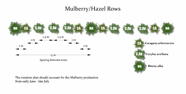 Mulberry-Hazel%2BRows.jpg