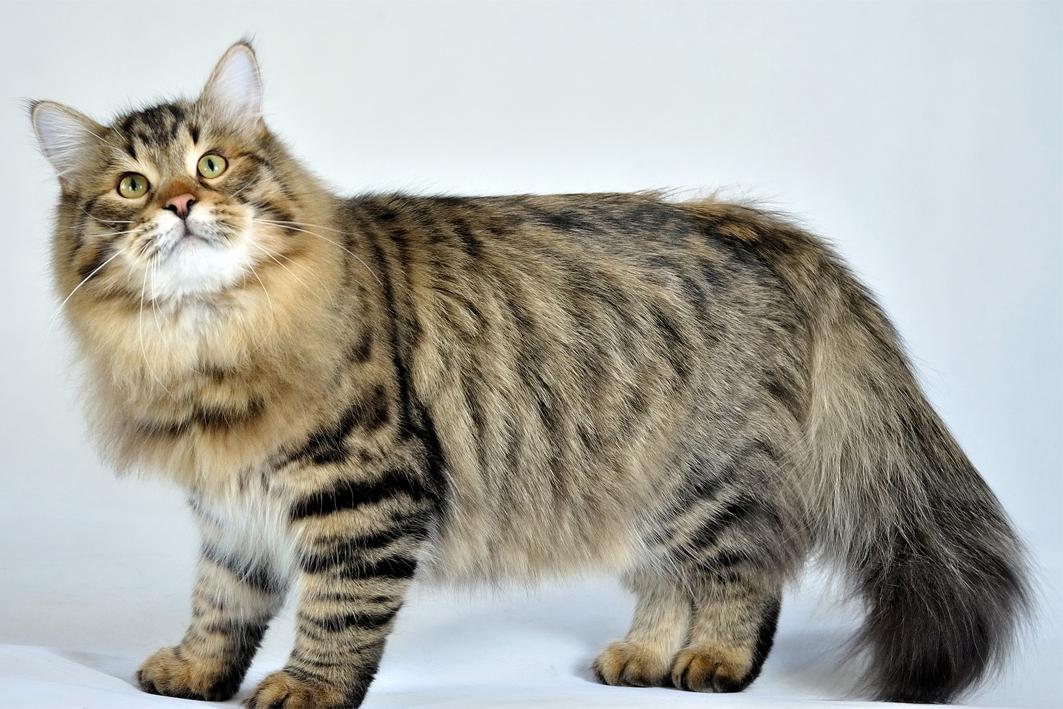 Gambar Kucing Lucu Keren - GAMBAR KUCING | GAMBAR KUCING LUCU