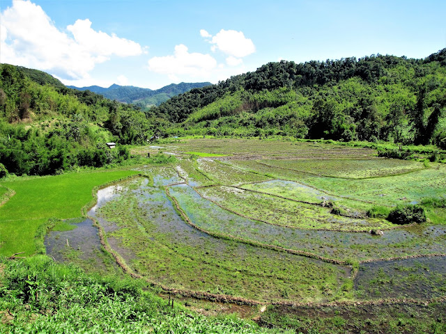 rice fields nam et phou louey national protected area laos